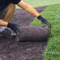Lawn Repair Stoke Newington