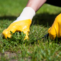 Lawn Repair Stoke Newington