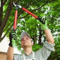 Tree Pruning Stoke Newington