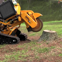 Stump Grinding Stoke Newington