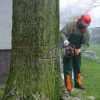 Tree Removal Stoke Newington