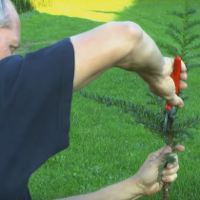 Weeding & Pruning Stoke Newington